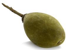 Le pain de singe fruit de baobab biologique